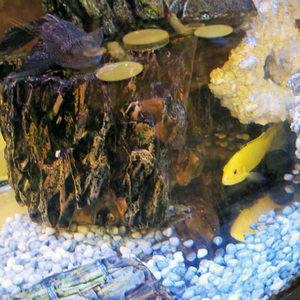 03_熱帯魚.jpg